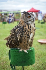 And another (some sort of owl methinks)